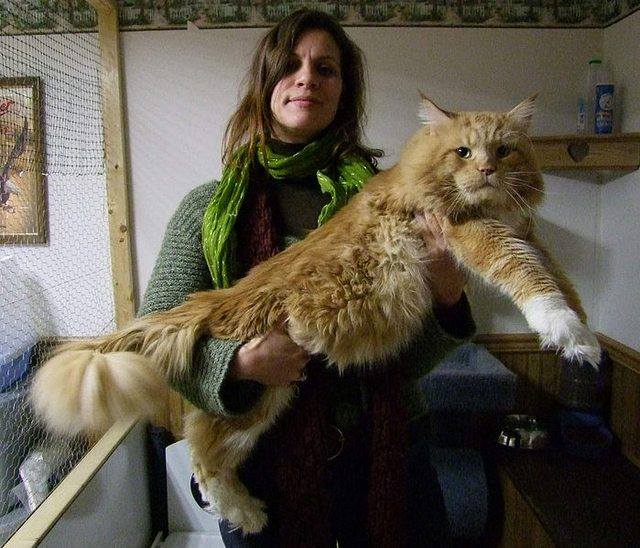gros-chat-15