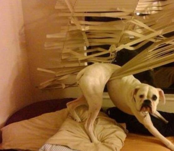 chiens-betises-1