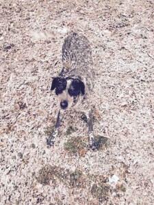 chiens-camouflages-4