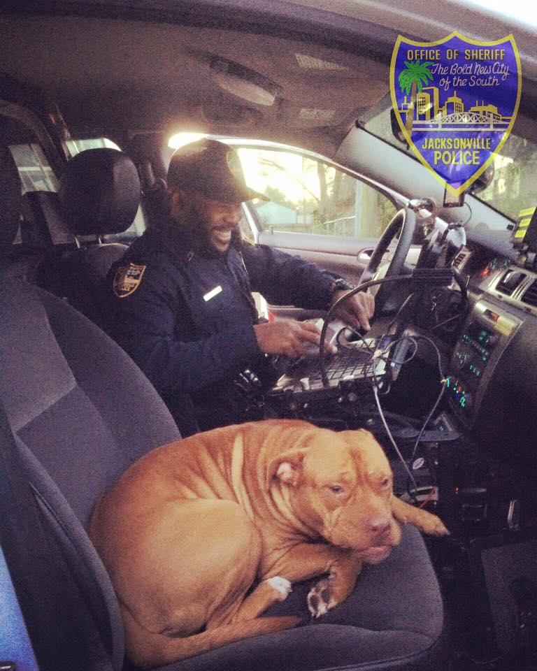 pitbull-lost-police-1