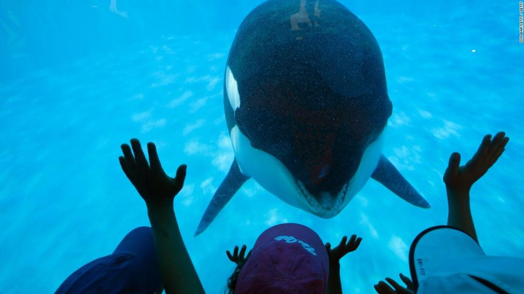 seaworld-peta-spy-1