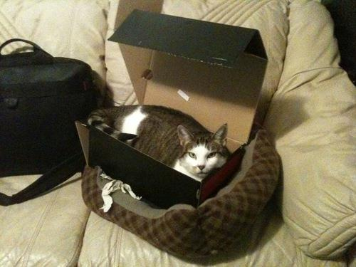 cat-funny-gift-5