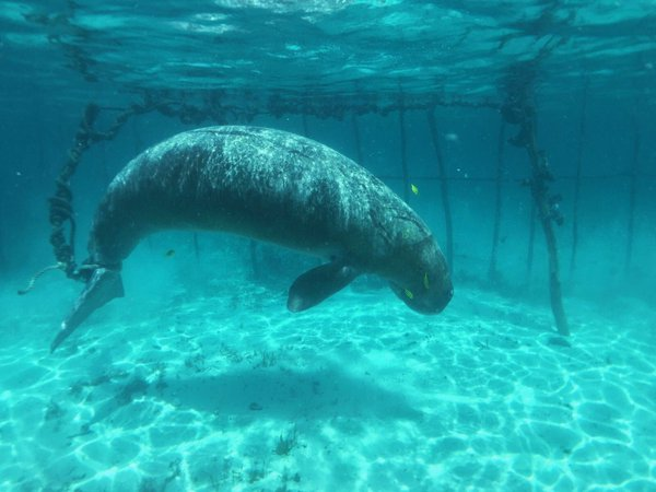 dugong-cage-indonesie-1