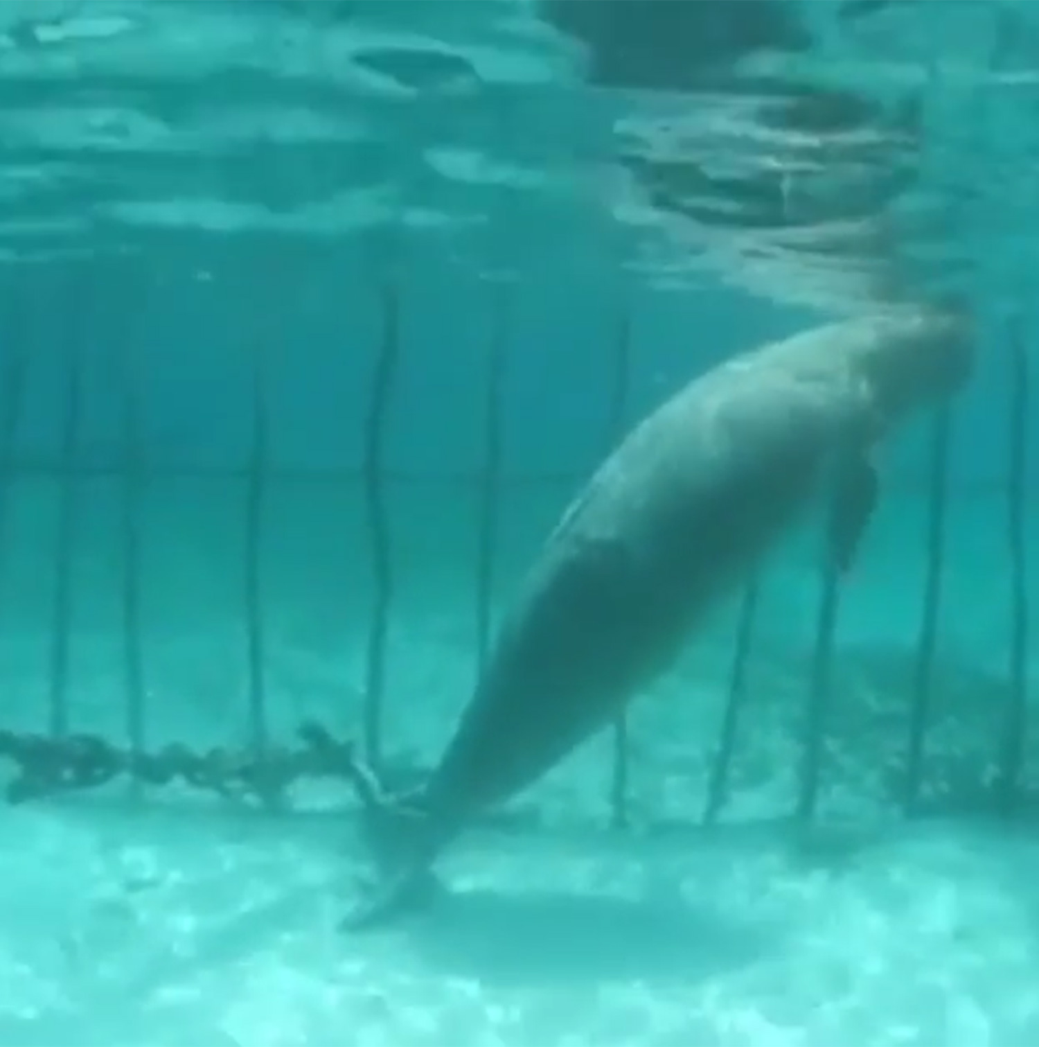 dugong-cage-indonesie-4