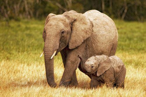 elephant-family-cute