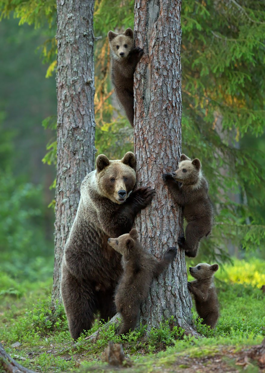 ours-famille-buzz