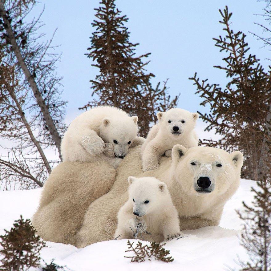 ours-photo-de-famille-buzz