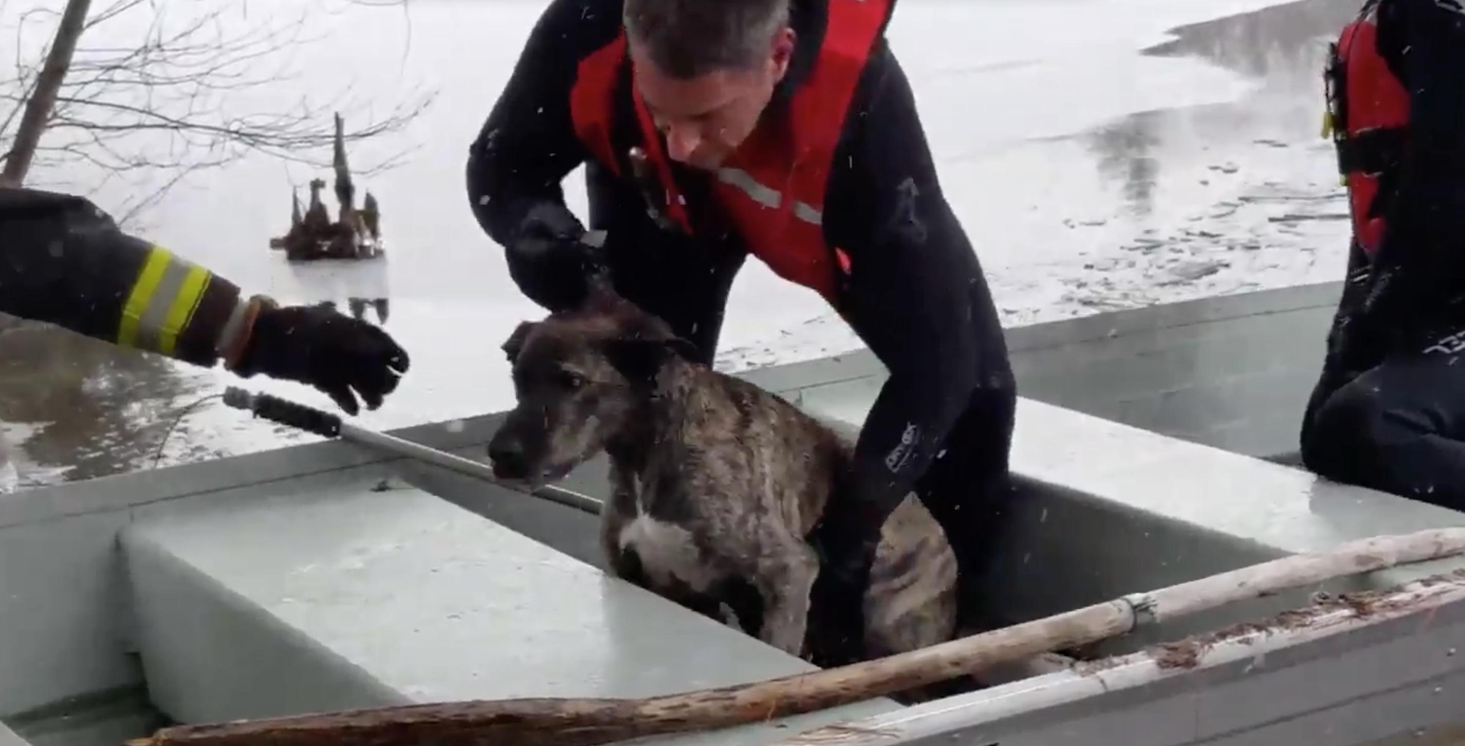 sauvetage-chien-riviere-gelee-4