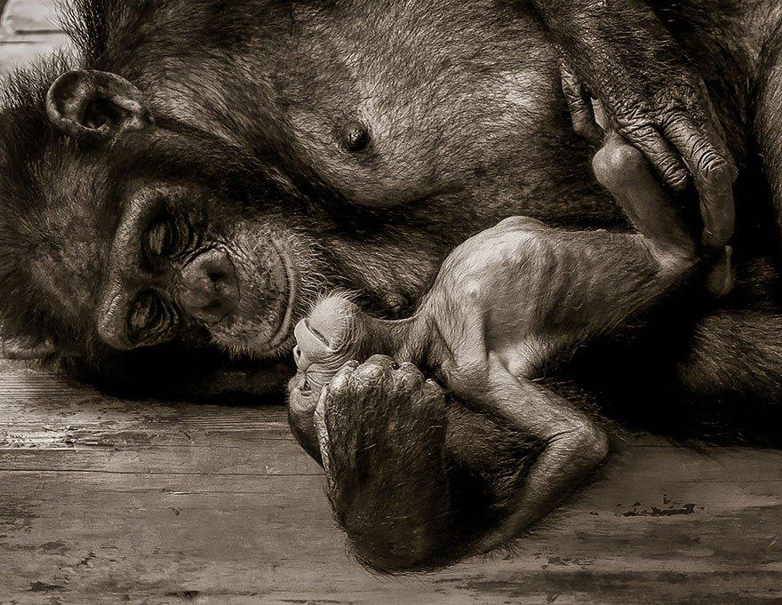singe-photo-de-famille