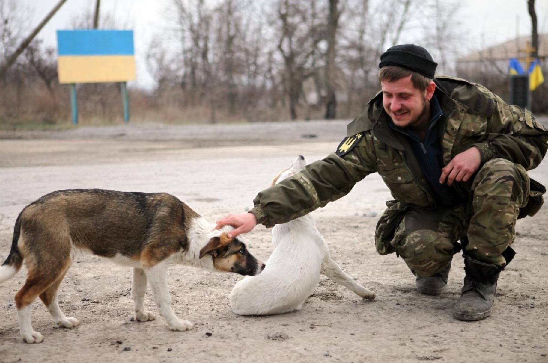ukraine-soldats-chats-chiens-1