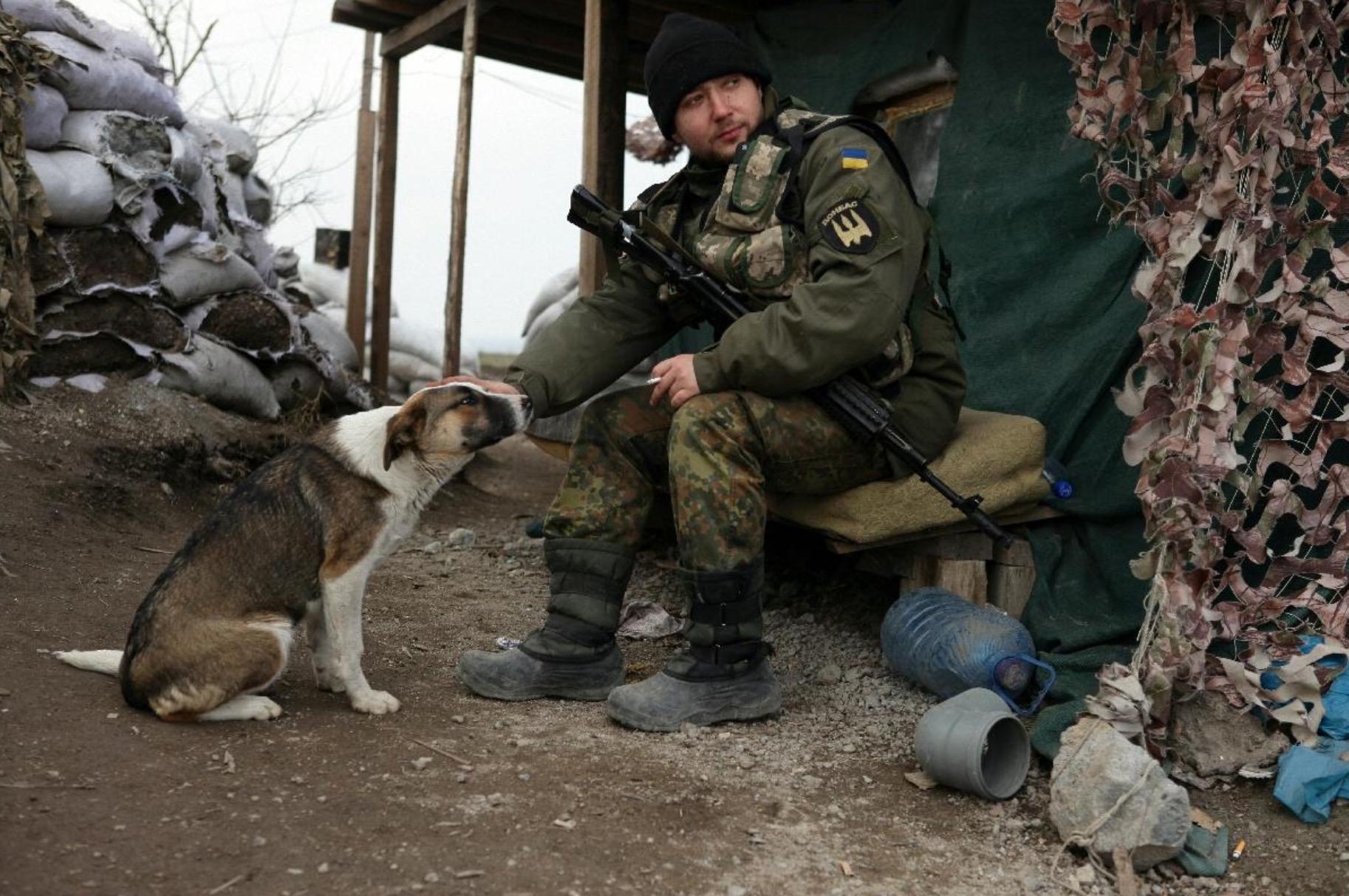 ukraine-soldats-chats-chiens-3