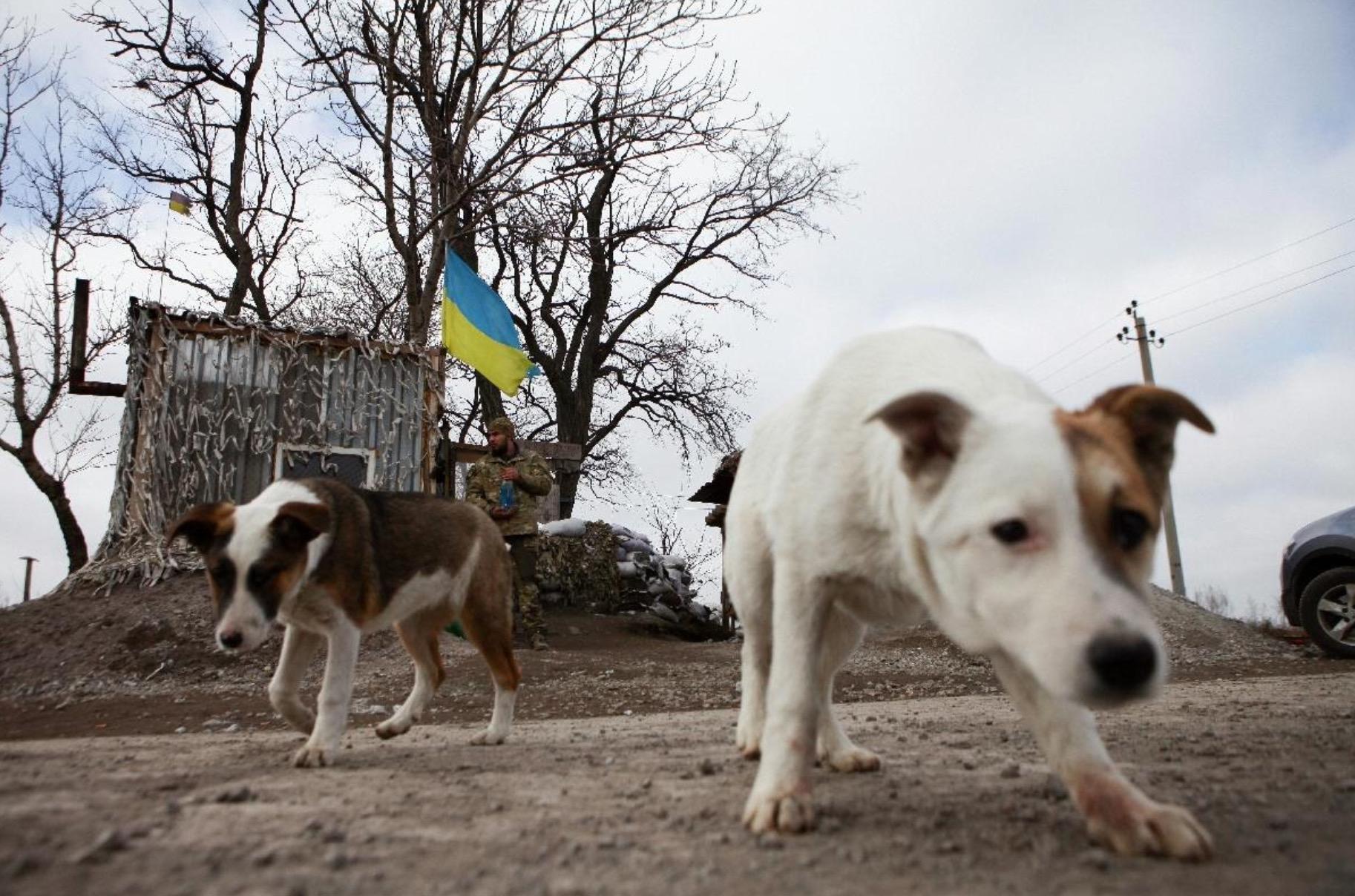 ukraine-soldats-chats-chiens-4