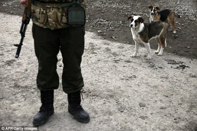 ukraine-soldats-chats-chiens-6