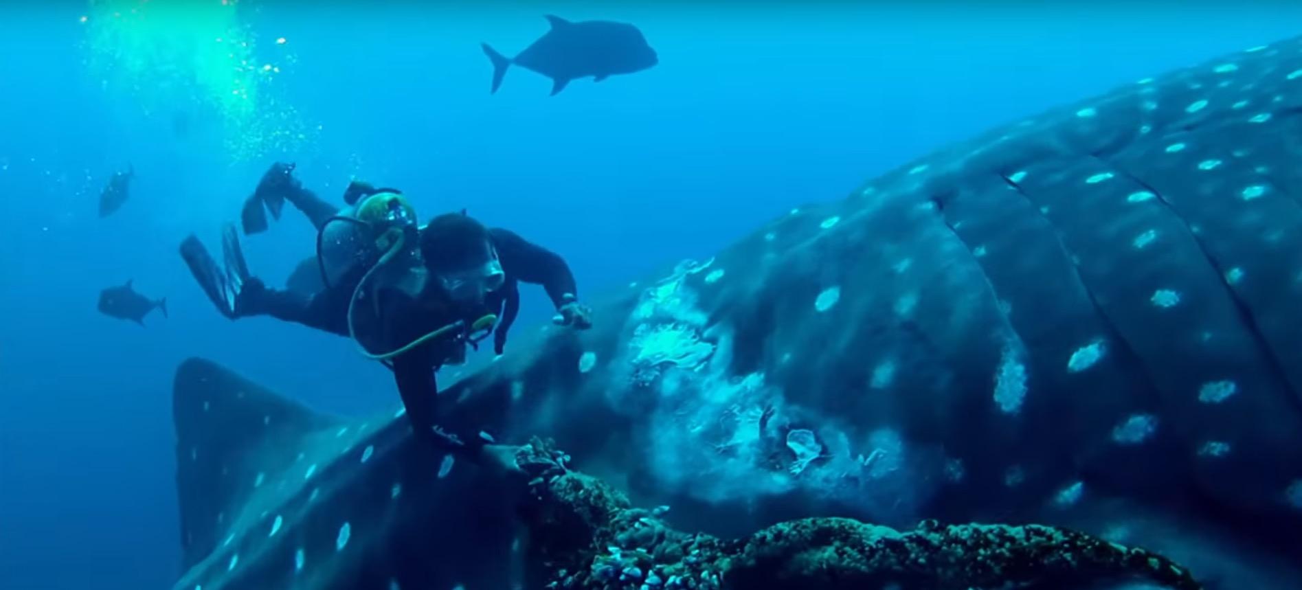 whale-shark-rescue-5