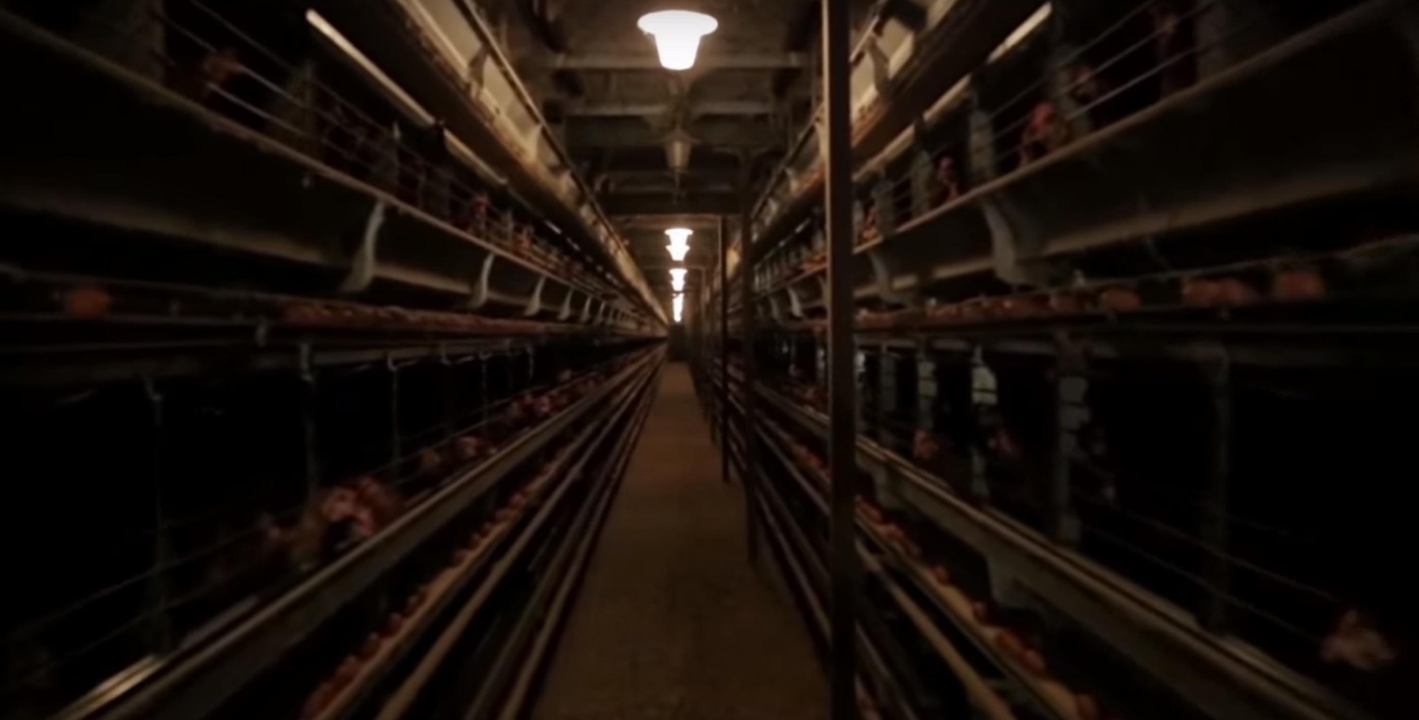 Monoprix-oeufs-poules-cages-3