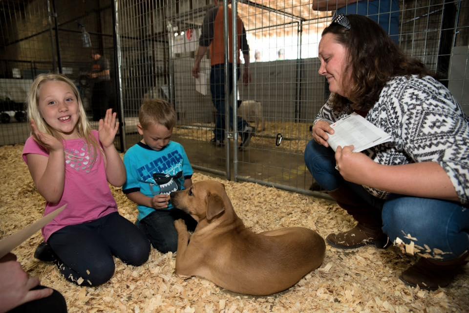 aspca-refuge-adoption-2