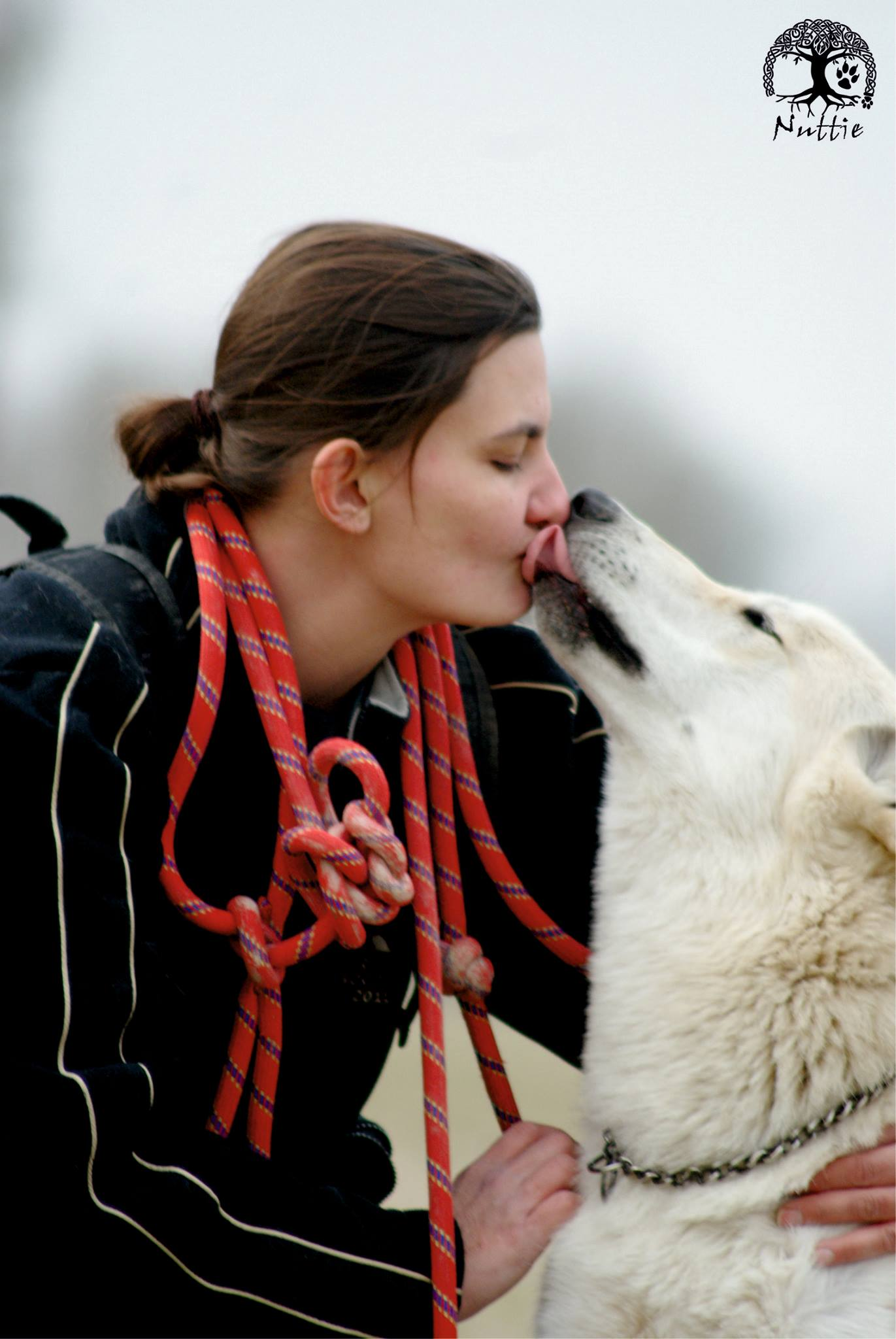 chiens-loups-condamne-france-31