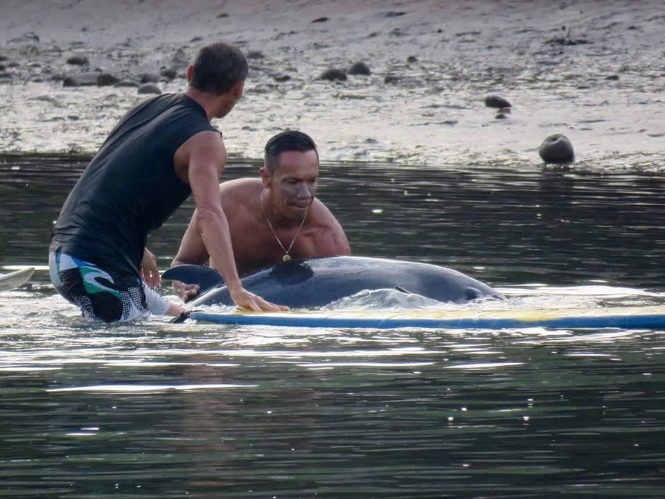 surfeur-baleineau-sauvetage-2