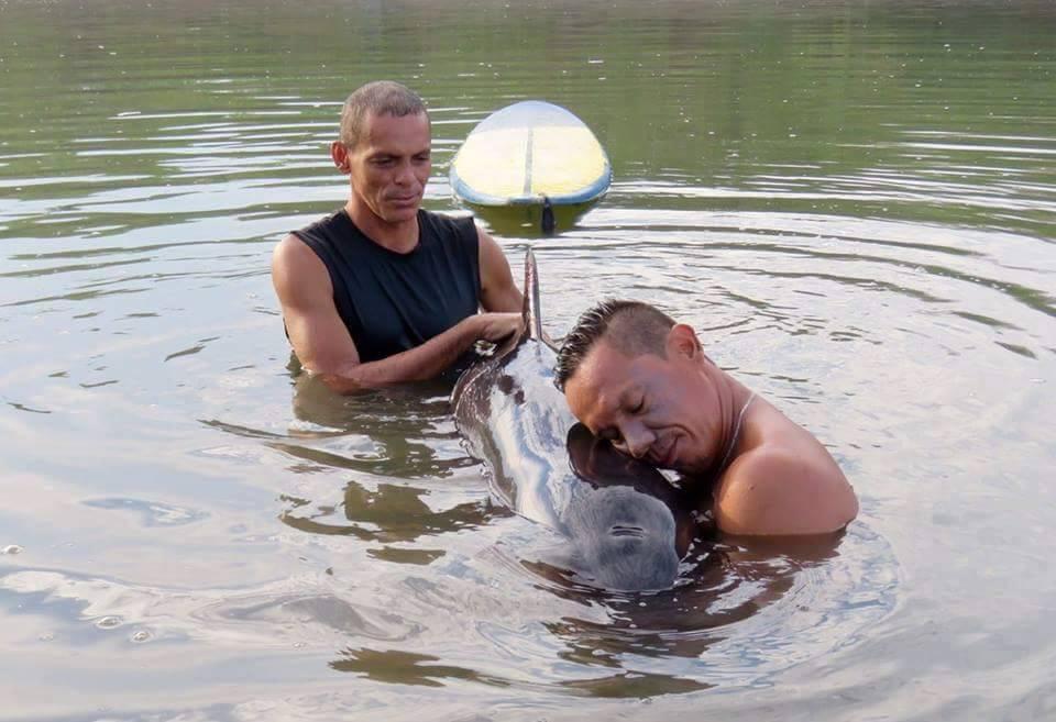 surfeur-baleineau-sauvetage-3