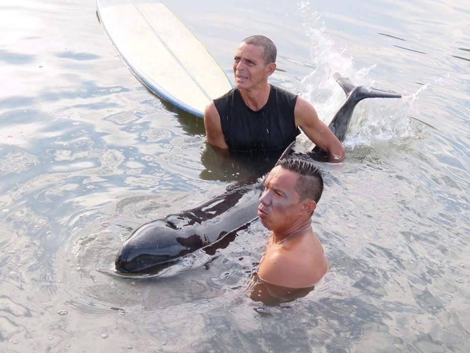 surfeur-baleineau-sauvetage-4