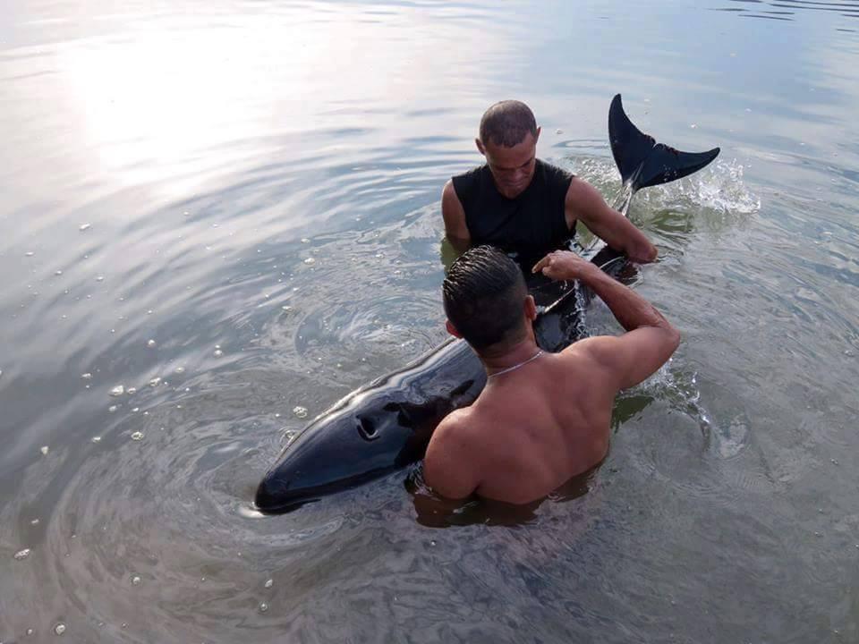 surfeur-baleineau-sauvetage-5