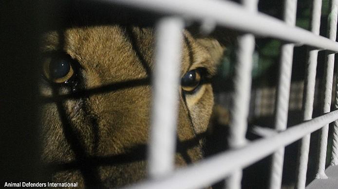 33-lions-sauvetage-refuge-aid-2