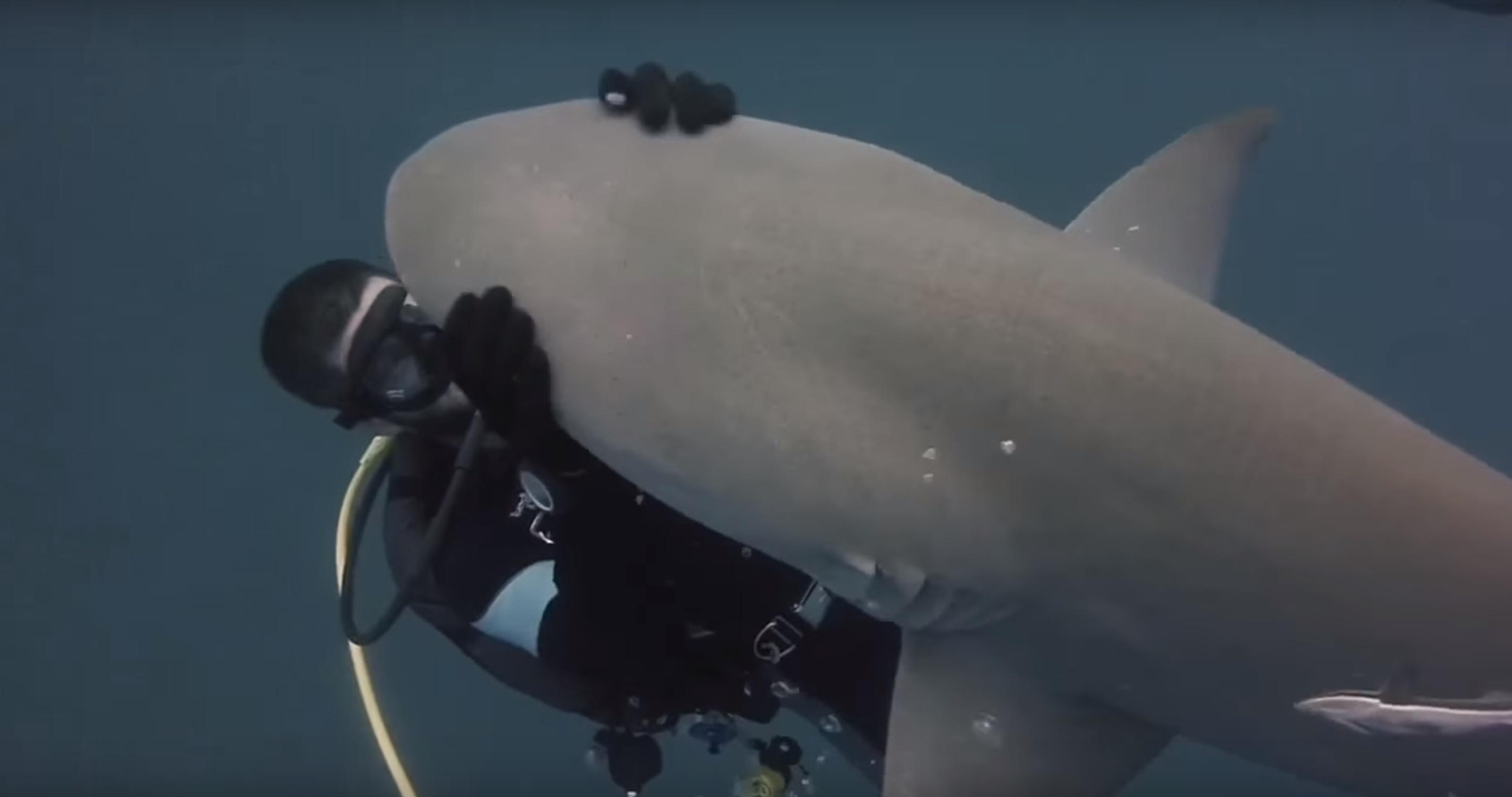 amitie-plongeur-requin-3