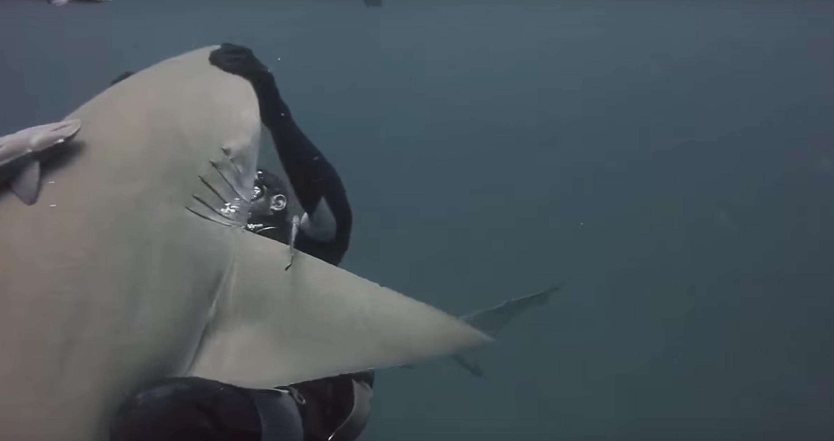 amitie-plongeur-requin-5
