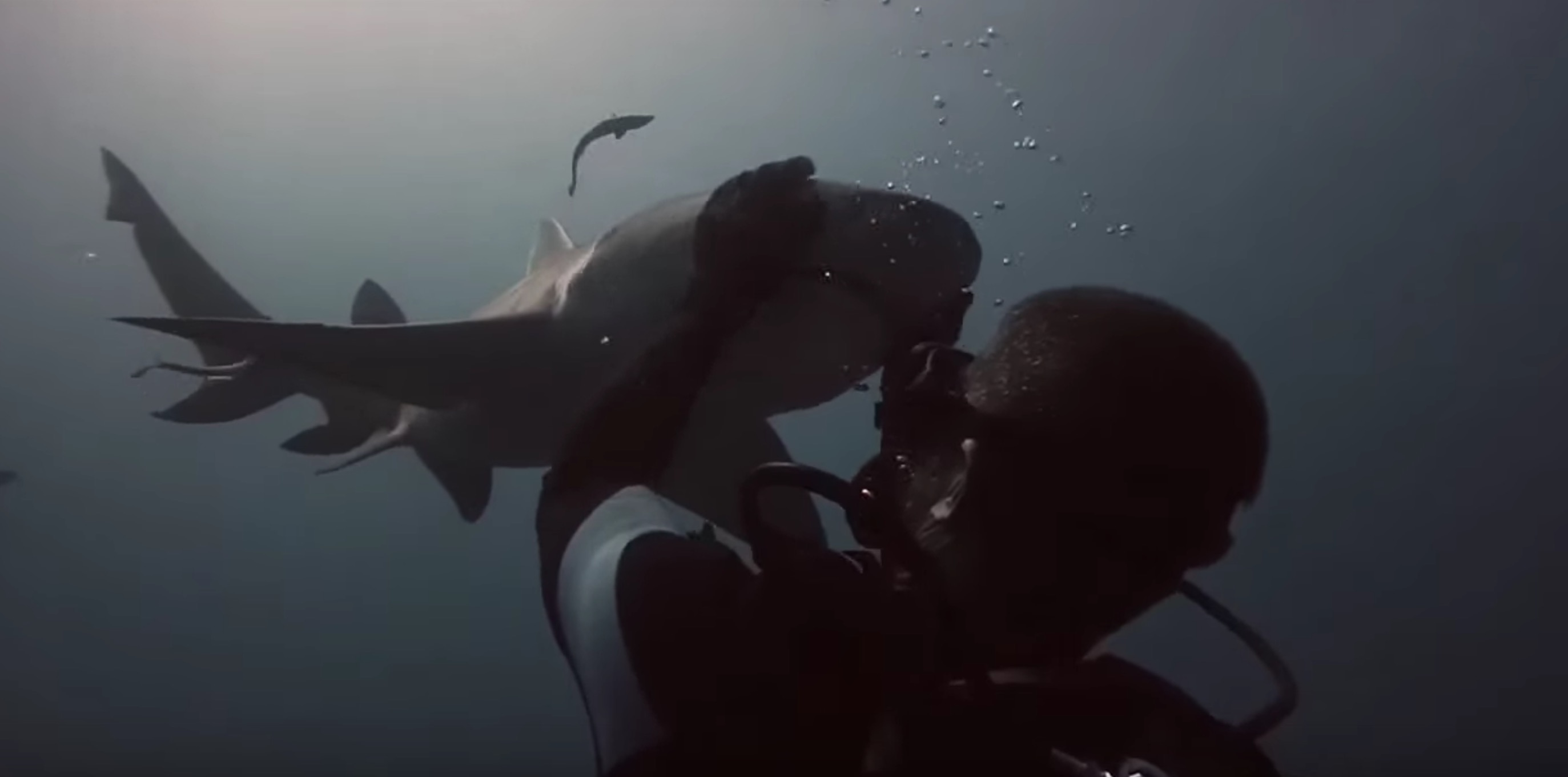 amitie-plongeur-requin-6