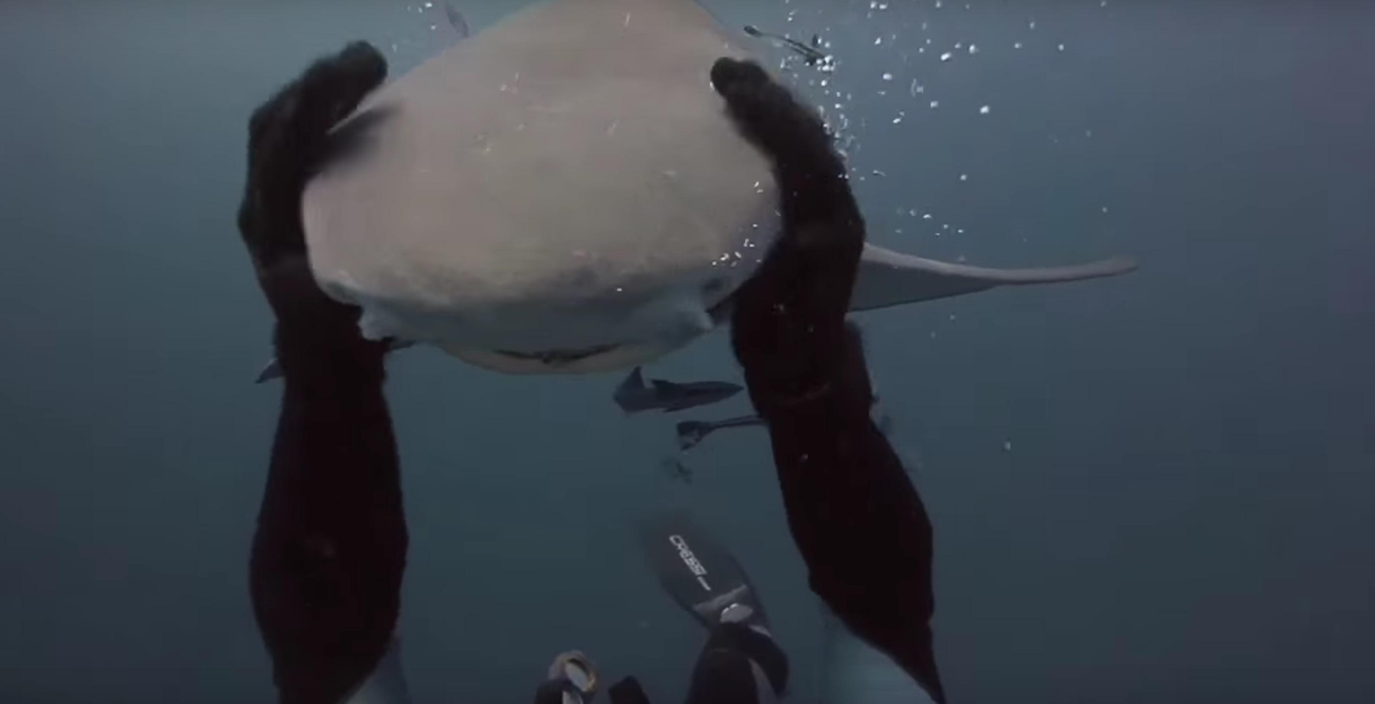 -amitie-plongeur-requin-7