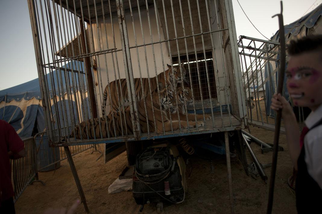 animaux-cirque-petition-patrimoine-culturel-21