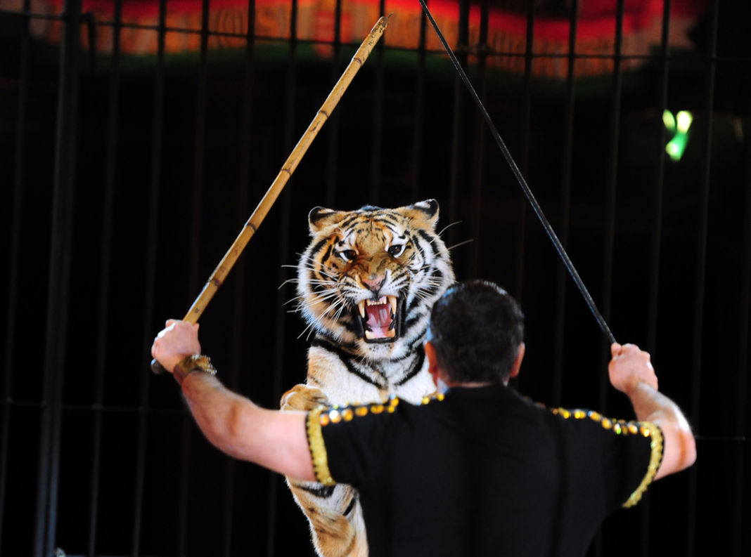animaux-cirque-petition-patrimoine-culturel-5