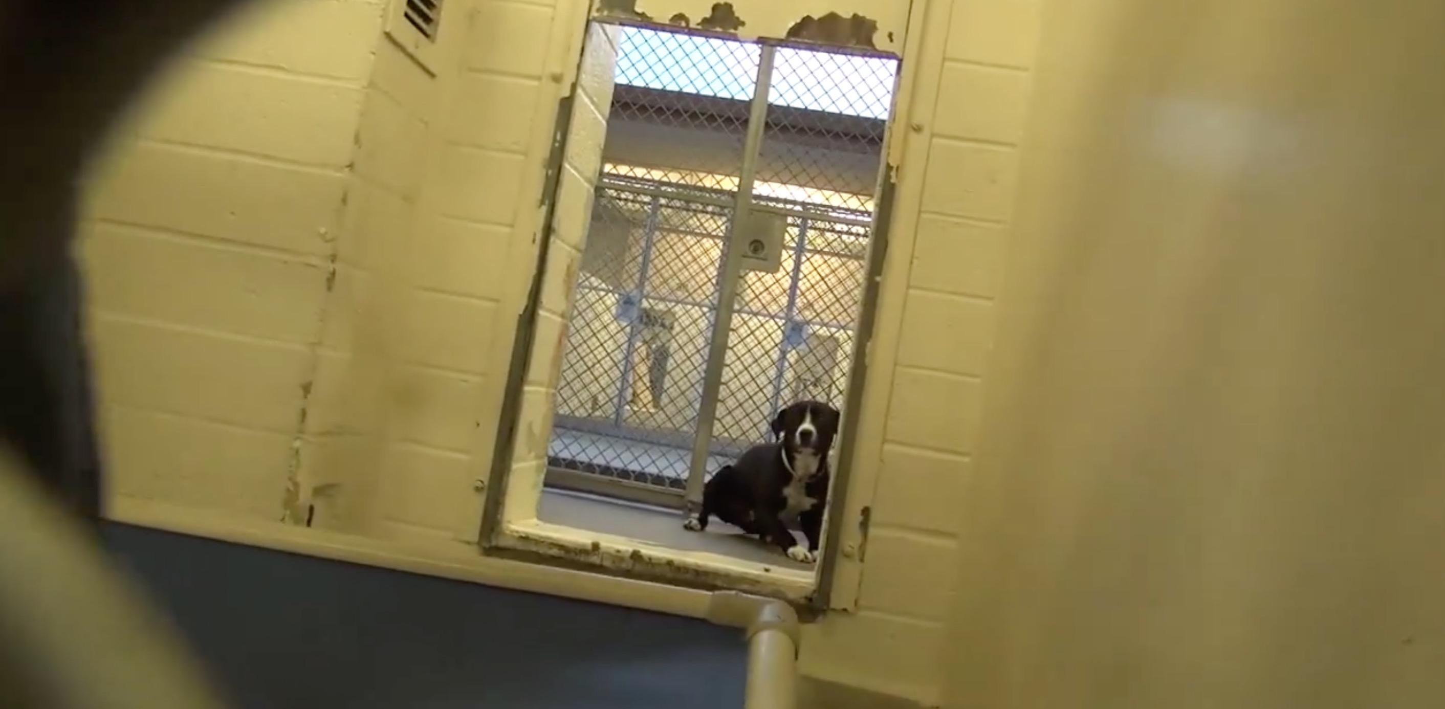 chien-adoption-joie-video-3