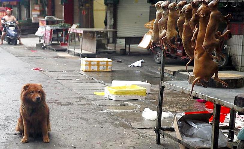 yulin-festival-7
