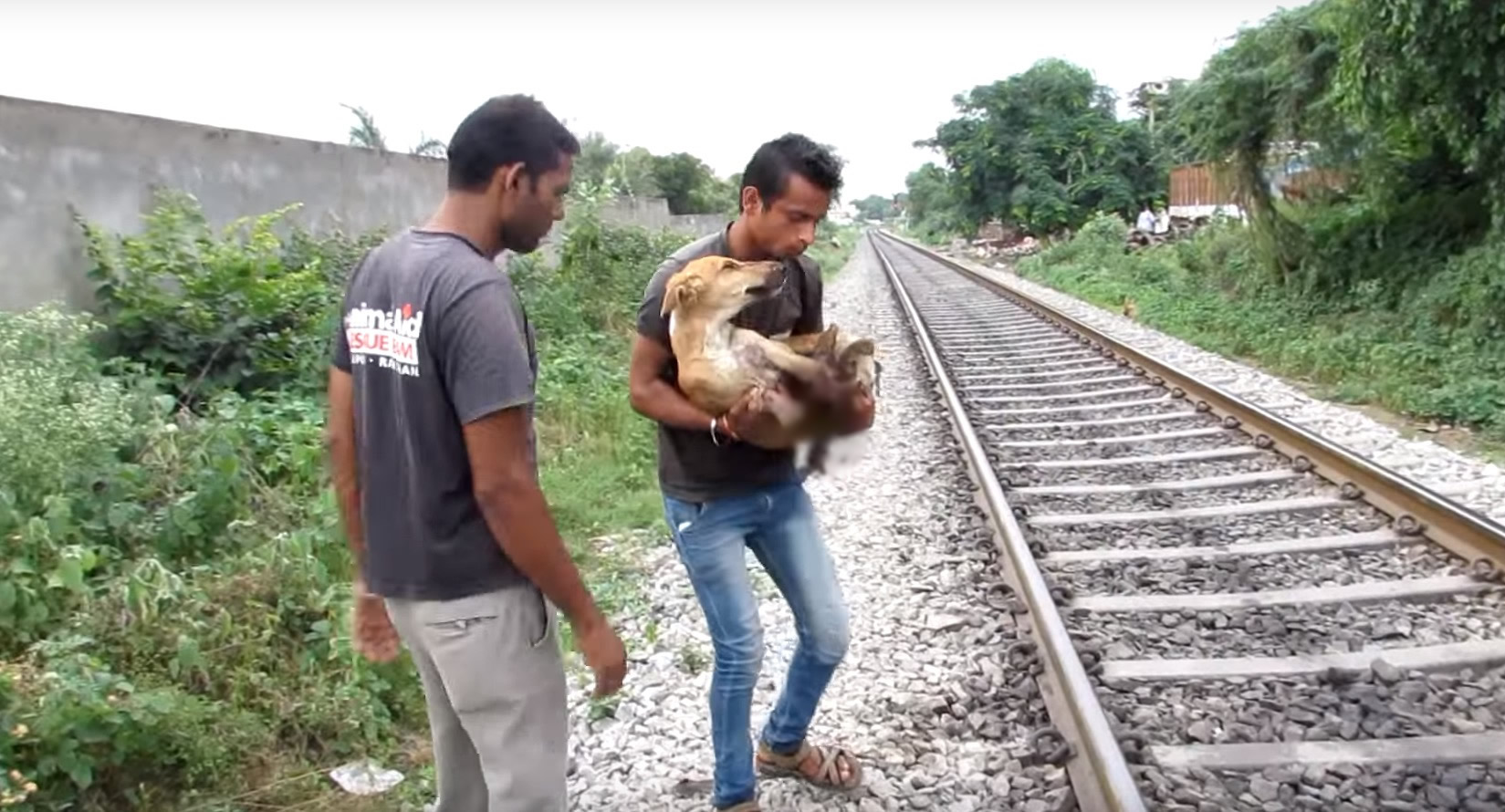 animal-aid-chien-train-blessures-3
