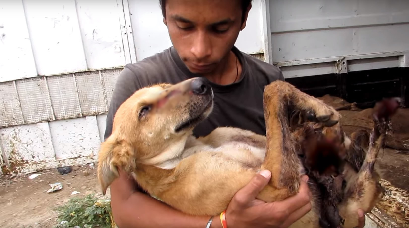 animal-aid-chien-train-blessures-4