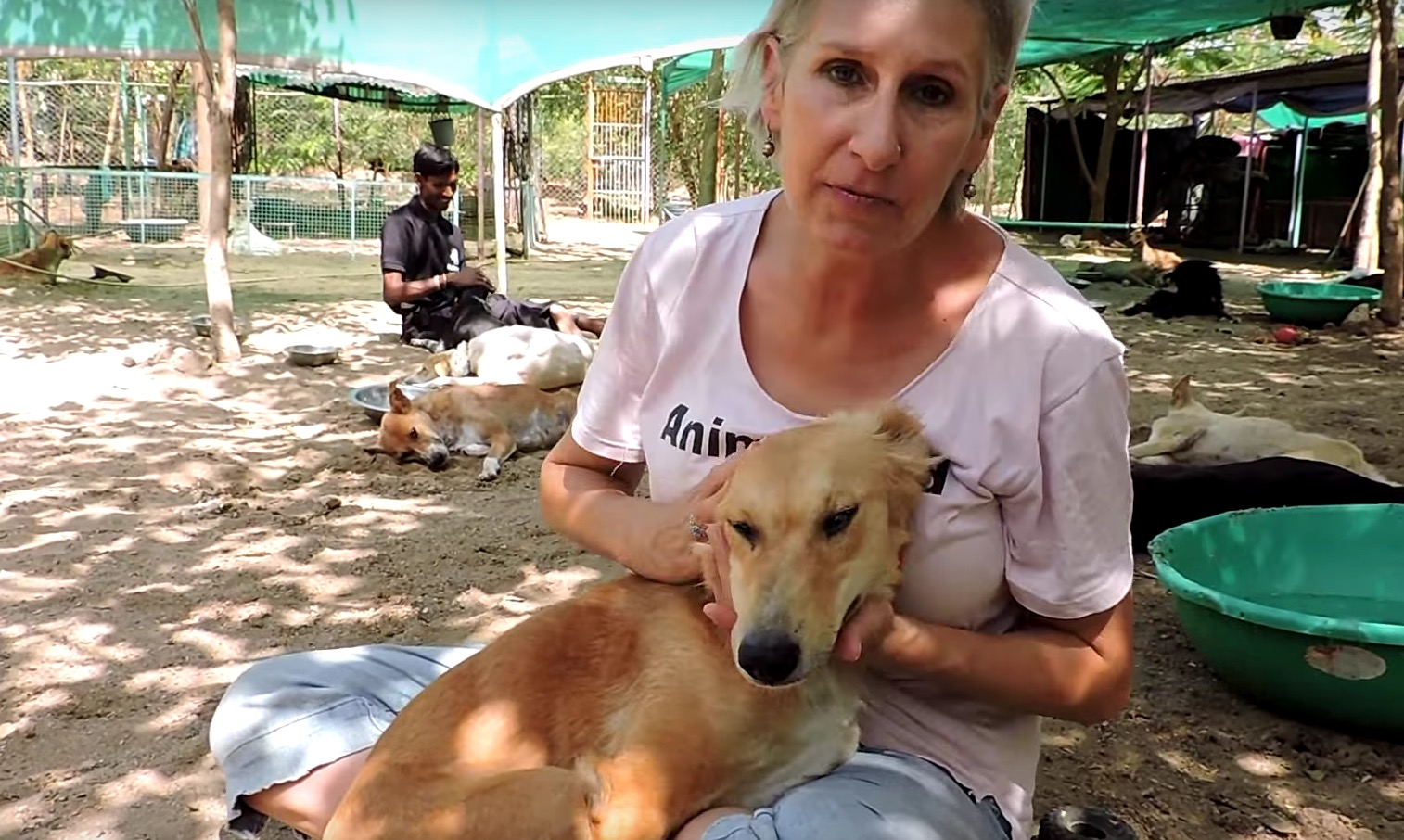 animal-aid-chien-train-blessures-5