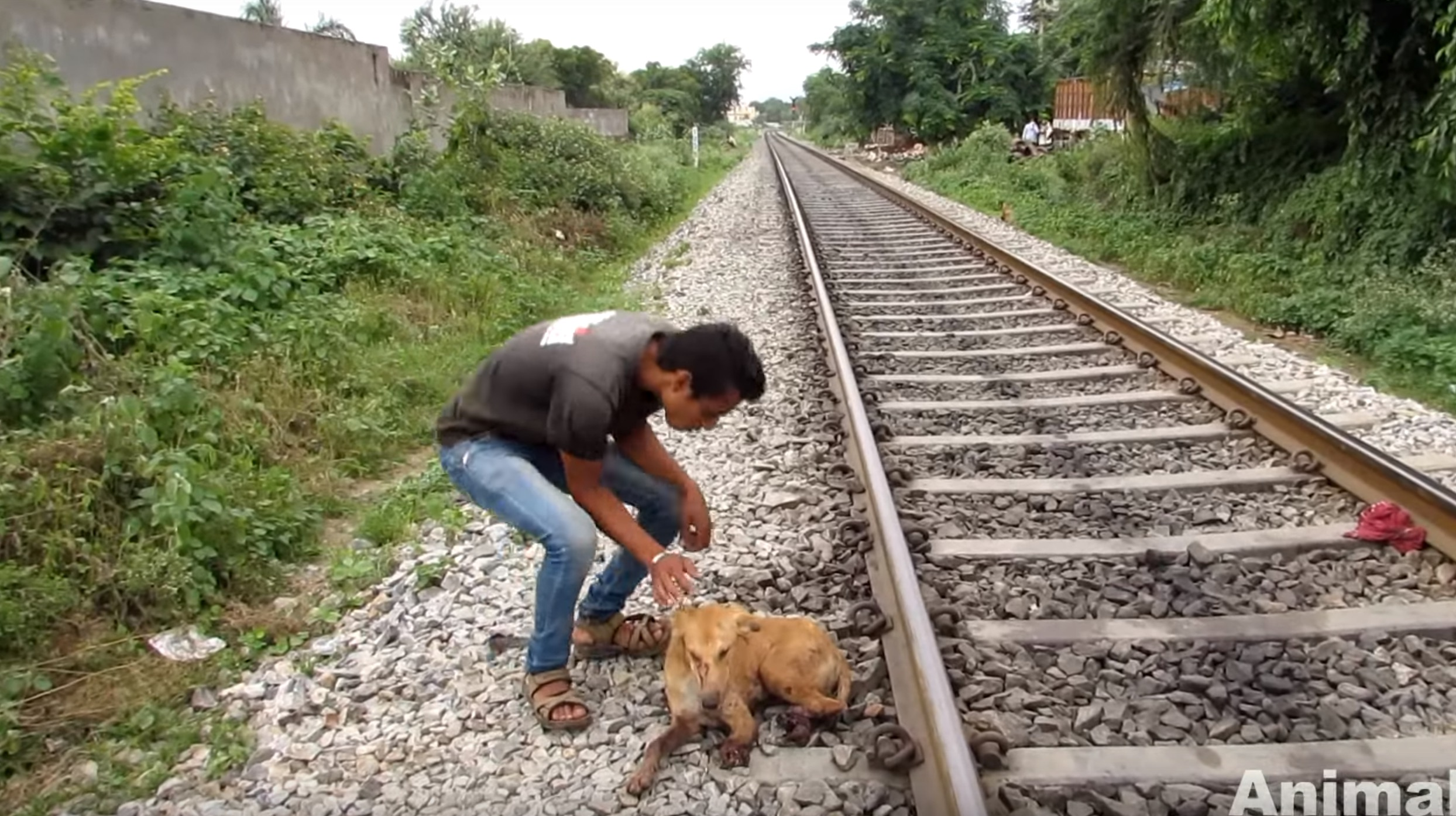 animal-aid-chien-train-blessures-7