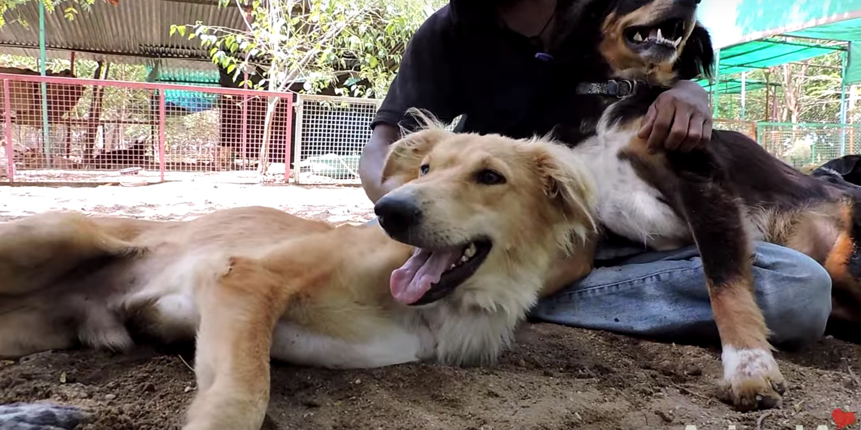 animal-aid-chien-train-blessures-9