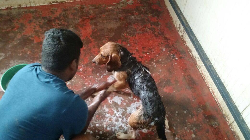 beagles-premier-bain-1