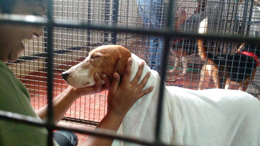 beagles-premier-bain-2