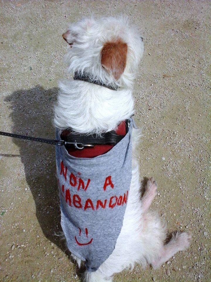 charity-walk-abandon-16