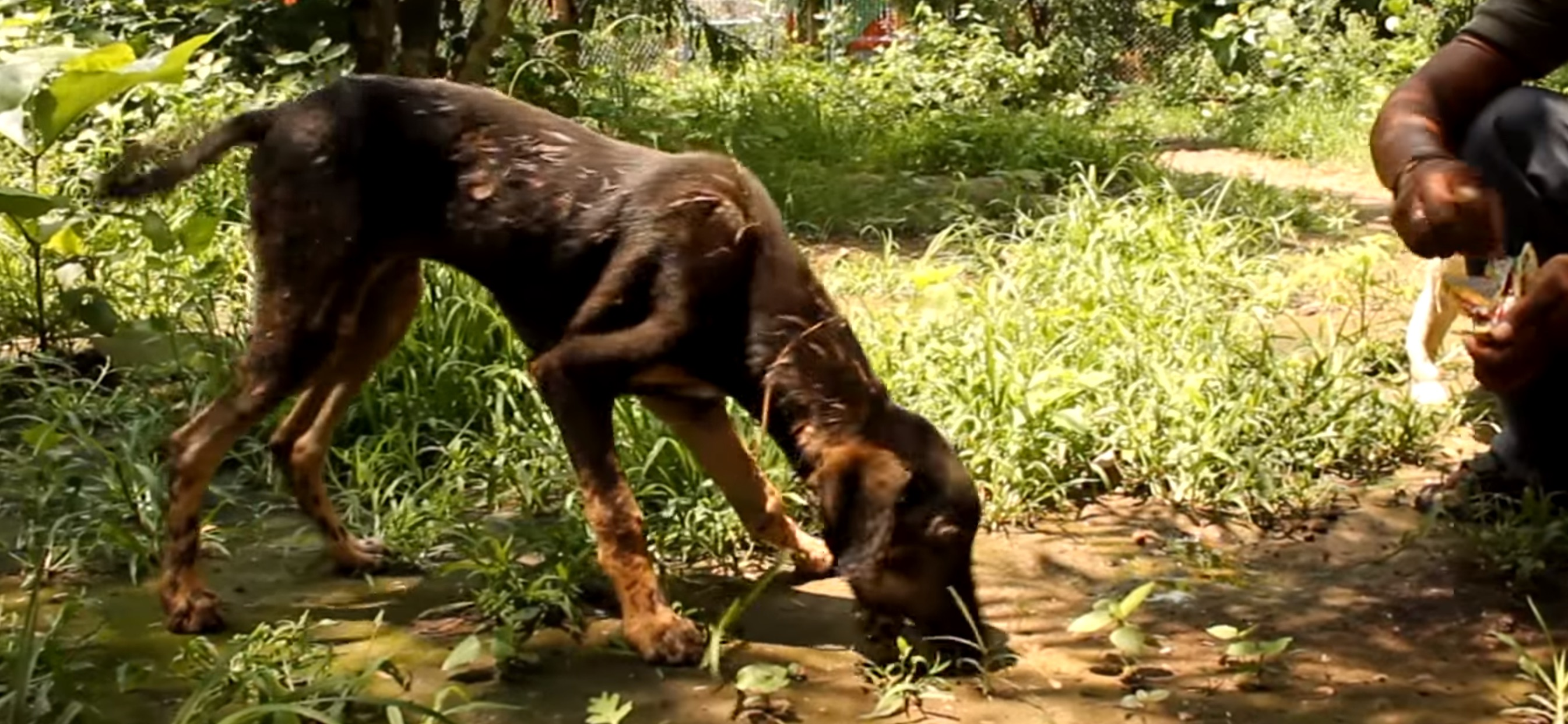 chien-goudron-sauvetage-inde-12