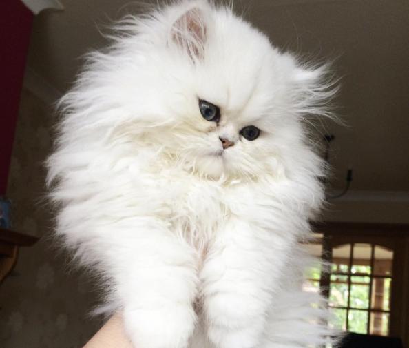 conseil-bonheur-chat-2