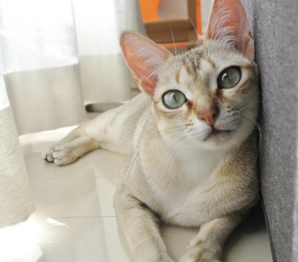 conseil-bonheur-chat-6
