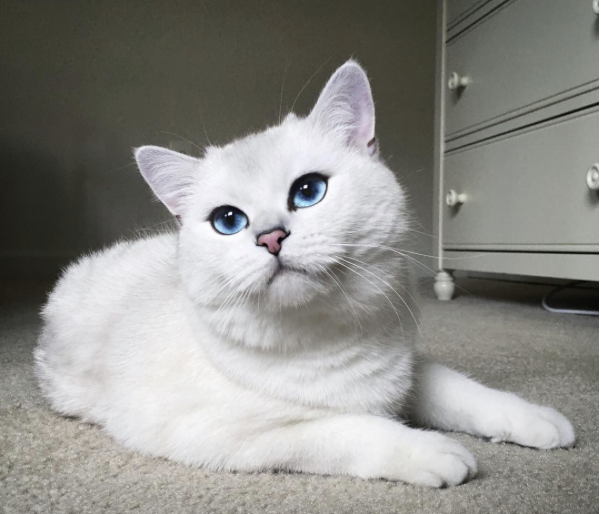 conseil-bonheur-chat-8