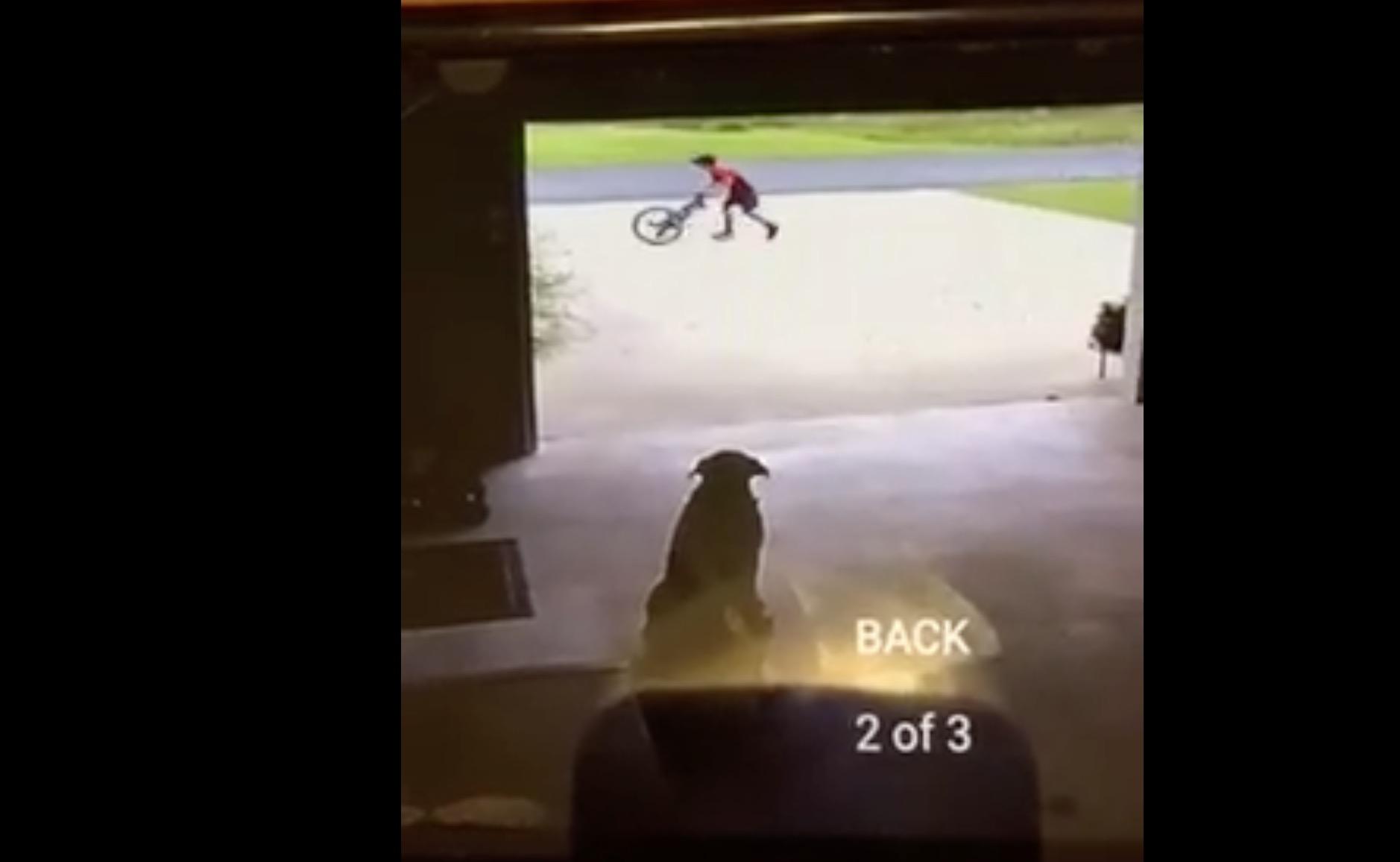 enfant-chien-camera-calin-4