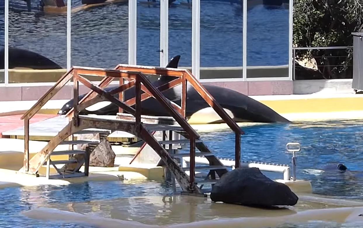 morgan-orque-loro-arque-11