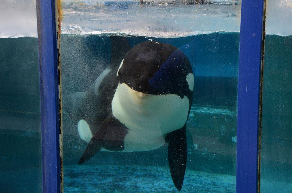morgan-orque-loro-arque-6
