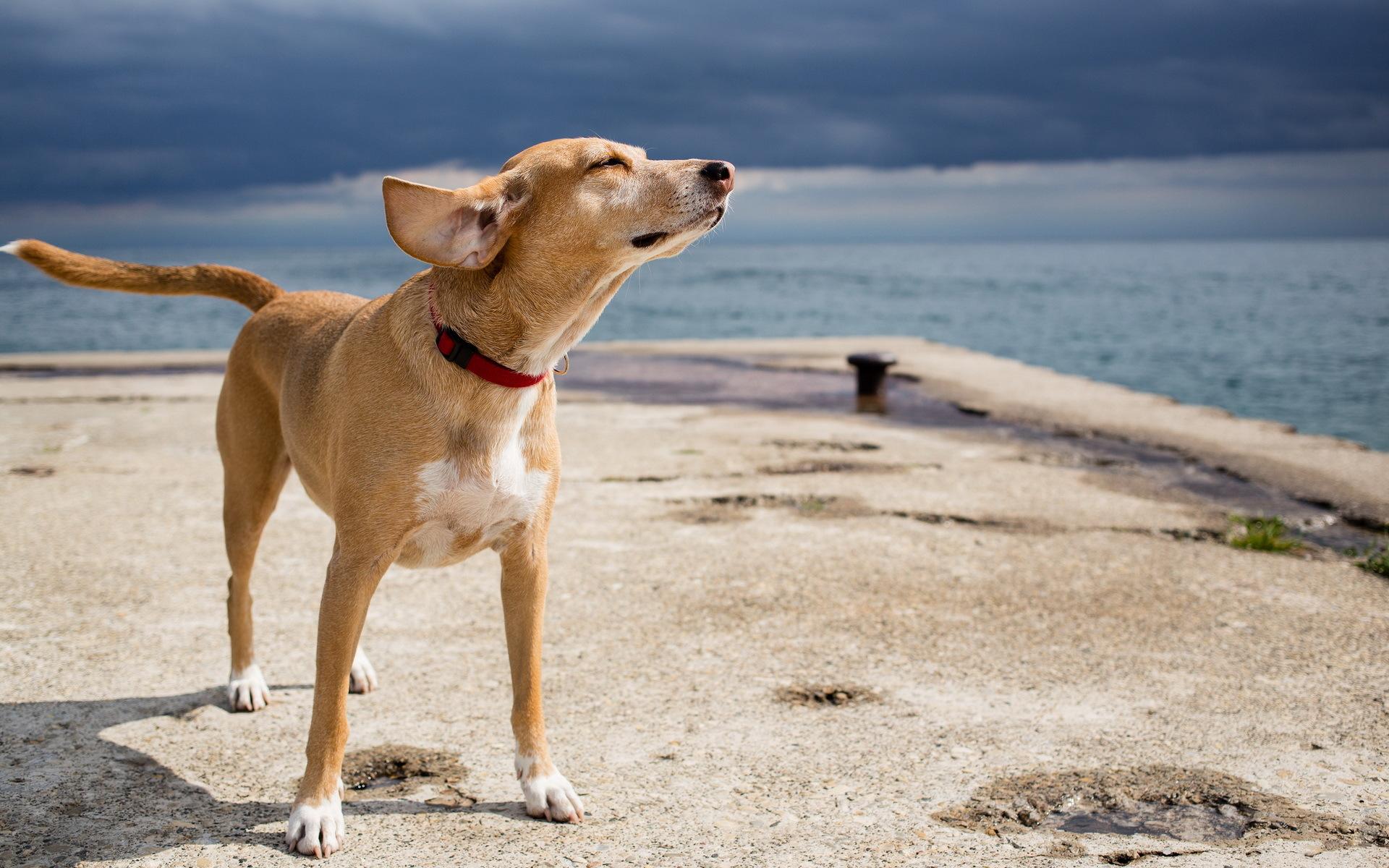 dog-beach-2017-5